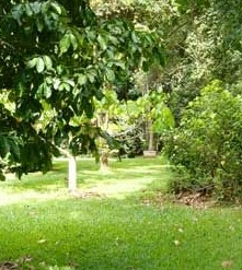 Kingfisher Park Birdwatchers Lodge - Hervey Bay Accommodation