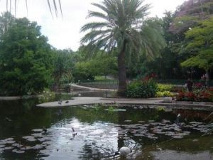 Brisbane City Botanic Gardens - Hervey Bay Accommodation