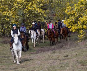 Burnelee Excursions on Horseback - Hervey Bay Accommodation